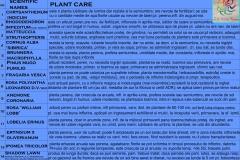 006.ingrijire-plante-gr.-blocului-eng