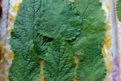 mint-orangepeel-honey-butter-wafersheets