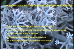 003.-lichens-care-guideliness-for-optimal-lifespan-